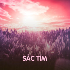 Sắc Tím - Various Artists