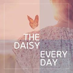 Everyday (Single) - The Daisy