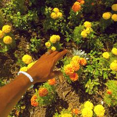 Peach Fuzz (Single) - Tyler, The Creator