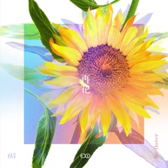 [Re:Flower] PROJECT #5 (Single)