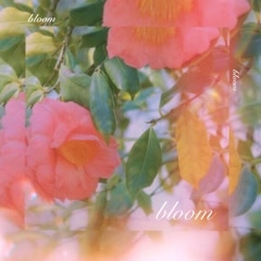 Bloom (Single) - LoveSong