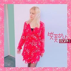 Cherry Blossom (Single)