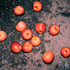 Night Apple (Single)