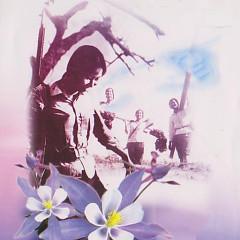 Cô Gái Mở Đường  - Cao Minh,Quang Lý,Various Artists
