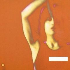 - (Minus) - Single Collection Vol.2