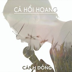 Cánh Đồng (Single) - Cá Hồi Hoang
