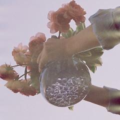 The Flower In The Bottle (Single)