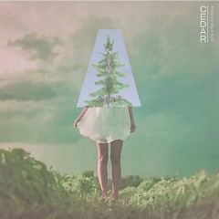 Cedar (Single) - OMAN
