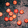Night Apple